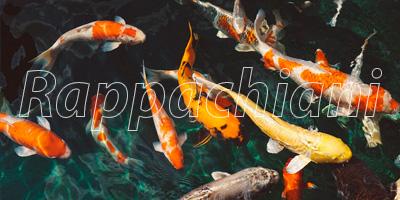 Pisos impermeables para estanques artificiales de agua for Cria de peces en estanques de cemento